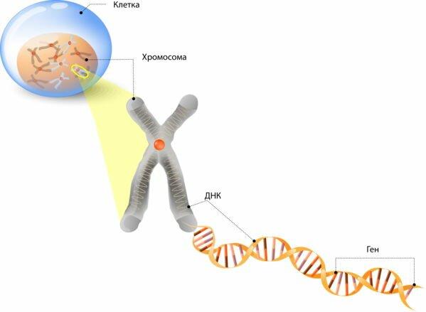 Цветок Жизни Строение ДНК